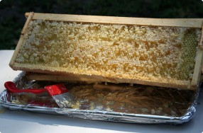 Beehive Honey Extraction