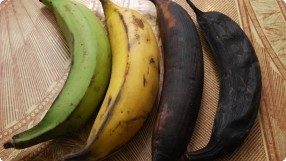 Plantain Stages of Ripeness & Uses