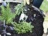 Small Space Gardening (Part 3): Container Gardening